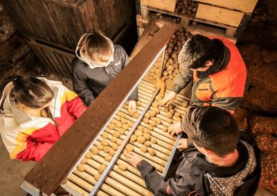 Arbeit im Kartoffellager