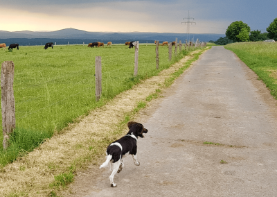 Spaziergang um die Obersteinberger Weiden